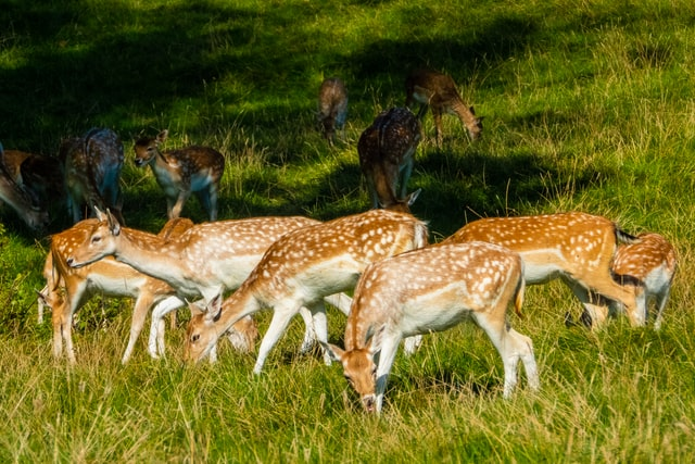 What Do You Call A Group Of Deer Proper Name For A Group Of Deer